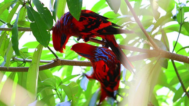 Two colourful birds sitting on a branch.